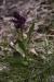 cascate-groppo-albareto-parma-val-gotra-1041_0