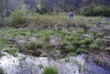cascate-groppo-albareto-parma-val-gotra-1261