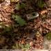 valmozzola-val-taro-luglio-2012-19-cervo-volante-lucanus-cervus-l