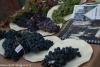 expo-taro-ceno-2012-compiano-parma-340-frutta-antica