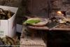 festa-della-castagna-2012-folta-albareto-038ricetta-con-testi-terracotta