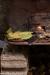 festa-della-castagna-2012-folta-albareto-043ricetta-con-testi-terracotta