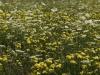 07-07-2012-fotografiamo-loasi-dei-ghirardi-12