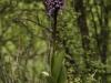 oasi-ghirardi-aprile-2012-val-taro-1013