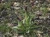 oasi-ghirardi-aprile-2012-val-taro-1016