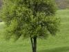oasi-ghirardi-aprile-2012-val-taro-1028