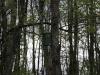 oasi-ghirardi-aprile-2012-val-taro-1077