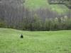 oasi-ghirardi-aprile-2012-val-taro-1081