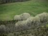 oasi-ghirardi-aprile-2012-val-taro-1085