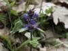 oasi-ghirardi-aprile-2012-val-taro-1105