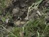 oasi-ghirardi-aprile-2012-val-taro-1135