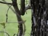 oasi-ghirardi-aprile-2012-val-taro-1148