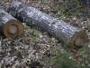 oasi-ghirardi-aprile-2012-val-taro-1175