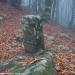 salamandra-berceto-parma-val-baganza-settembre-2012-215