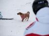 albareto-sci-slalom-2012-450
