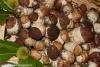 fiera-del-fungo-albareto-07-09-2012-123-porcini