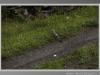 upupa-val-gotra-aprile-2012-1
