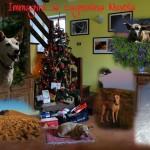 animale domestico di Alegrafia -  Immagini ....la cagnolina Nuvola