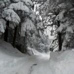 02-02-2012  NEVE -1  (93) Passo Cento Croci