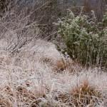 inverno natura 2011 Oasi Ghirardi-(23)