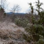 inverno natura 2011 Oasi Ghirardi-(24)