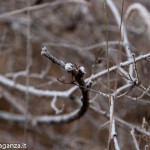 inverno natura 2011 Oasi Ghirardi-(29)