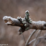 inverno natura 2011 Oasi Ghirardi-(31)