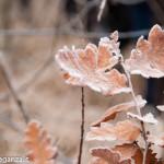 inverno natura 2011 Oasi Ghirardi-(32)