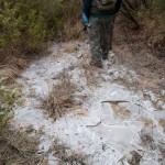 inverno natura 2011 Oasi Ghirardi-(36)