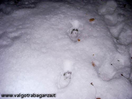 Lupo investito (03)e tracce nella neve