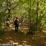 Monte Gottero 16-07-2012 (1045) sentiero bosco di faggio
