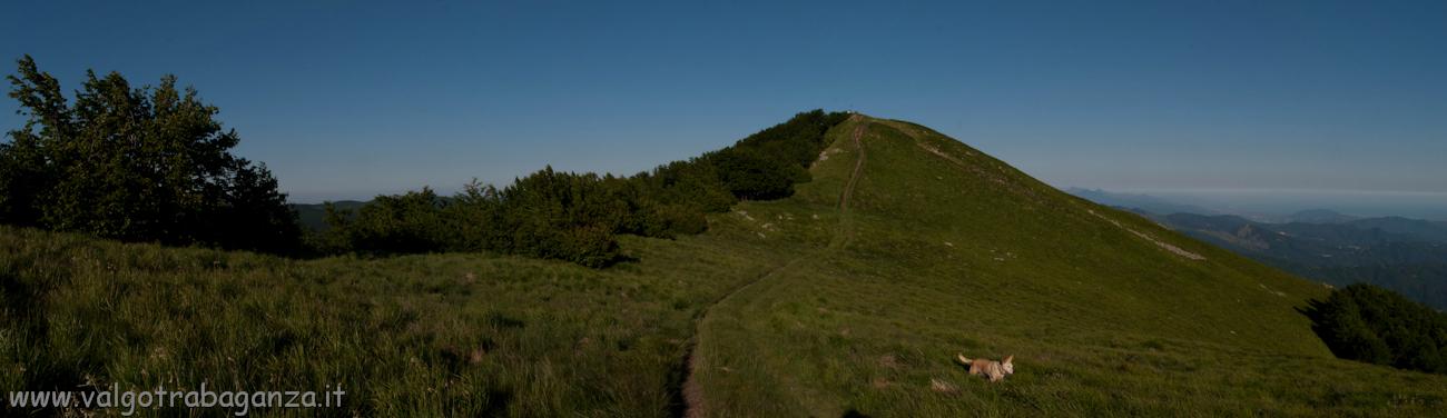 Monte Gottero - crinale - erba fina - panoramica