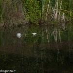 Lago di Gorro – Borgotaro (Parma) (203)