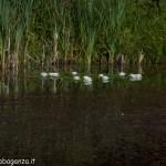 Lago di Gorro – Borgotaro (Parma) (204)