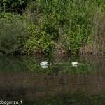Lago di Gorro – Borgotaro (Parma) (209)