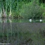Lago di Gorro – Borgotaro (Parma) (209)a