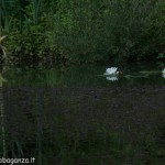 Lago di Gorro – Borgotaro (Parma) (210)