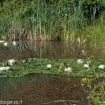 Lago di Gorro – Borgotaro (Parma) (238)