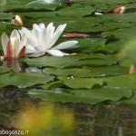 Lago di Gorro – Borgotaro (Parma) (240)