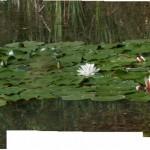 Lago di Gorro – Borgotaro (Parma) (244) cartolina