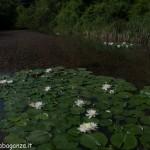 Lago di Gorro – Borgotaro (Parma) (300) panoramica