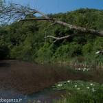 Lago di Gorro – Borgotaro (Parma) (316)