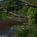 Lago di Gorro – Borgotaro (Parma) (317)
