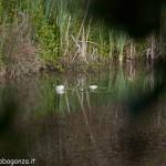 Lago di Gorro – Borgotaro (Parma) (334)