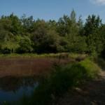 Lago di Gorro – Borgotaro (Parma) (345)