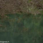 Lago di Gorro – Borgotaro (Parma) (348)