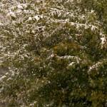 2012-10-28 neve autunnale Albareto (10)