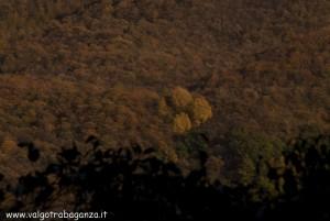 2012-11-05 Borgotaro (Parma) autunno in Val Taro (24)