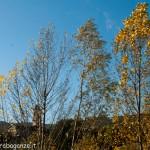 2012-11-05 Borgotaro (Parma) autunno in Val Taro (29)