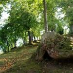 Bosco di castagno Folta Albareto Parma (1)